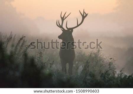 A deer in the colors of a foggy morning. Royalty-Free Stock Photo #1508990603