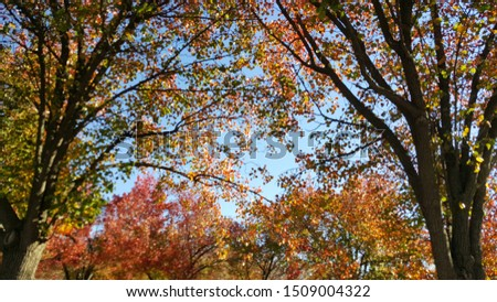 sunlight shining through tree branches in autumn #1509004322
