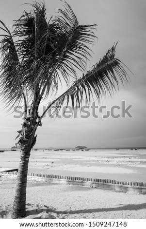 Palm tree at the beach, black and white picture.