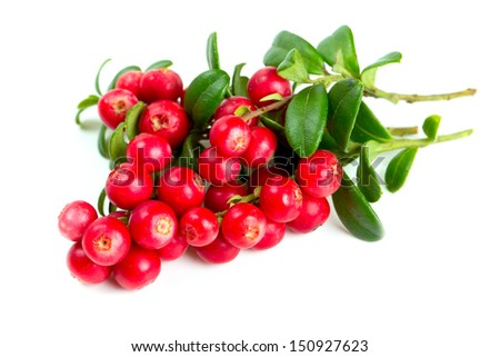 cowberries isolated on white background #150927623
