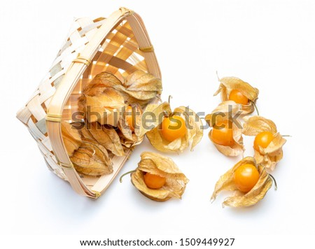 Basket with flowers and fruits of Fisalis (Physalis peruviana) isolated on white background. #1509449927