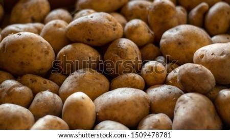 Background image of garden potatoes, Organic nature texture #1509478781