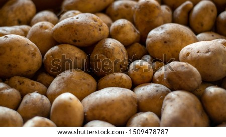 Background image of garden potatoes, Organic nature texture #1509478787