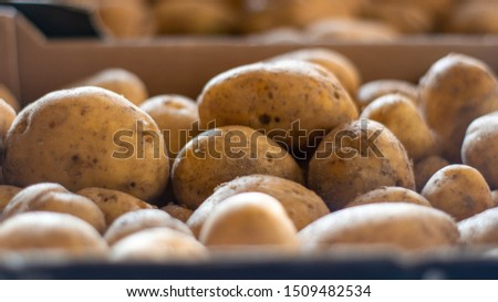 Background image of garden potatoes, Organic nature texture #1509482534