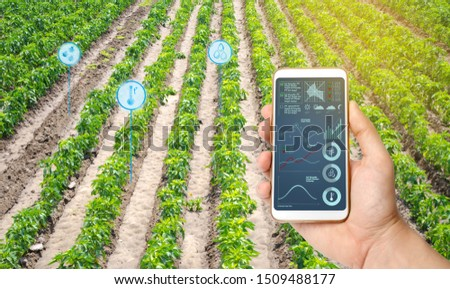 Farmer hold a smartphone on a background of a field with a pepper plantations. Agricultural startup. Automation and crop quality improvement. High technology, innovation. Scientific research. #1509488177