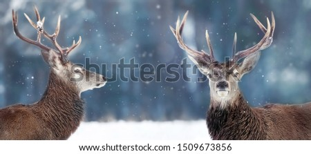 Noble deer male in winter snow forest. Winter christmas banner. Copy space. #1509673856
