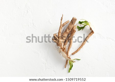 Common chicory root (Cichorium intybus). Chicory root (Cichorium intybus radix) helps to cleanse and strengthen the body, normalize the heart and blood vessels. Top view. Copy space text #1509719552