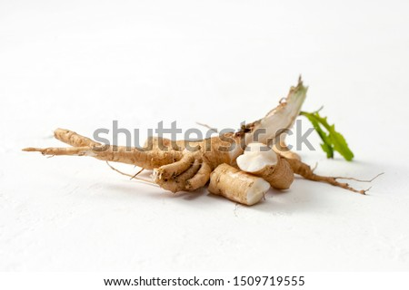 Common chicory root (Cichorium intybus). Chicory root (Cichorium intybus radix) helps to cleanse and strengthen the body, normalize the heart and blood vessels. #1509719555