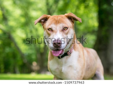 A red and white Husky mixed breed dog with a happy expression #1509737963