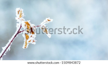 Covered a frost  branch tree  on blurred background. Copy space Royalty-Free Stock Photo #1509843872