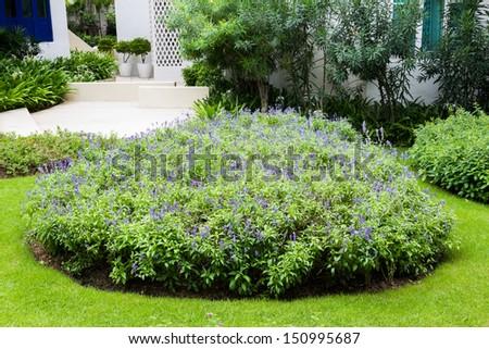 group of Golden Dew-Drop flower in the garden #150995687