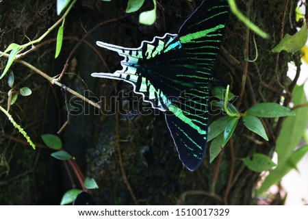 Macro photo of a beautiful and colorful butterfly perched on a tree in the jungle of Cuyabeno, Ecuadorian Amazon.