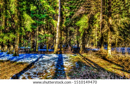 Forest trees sunlight background. Forest trees shadows. Sunlight forest trees background. Forest trees view #1510149470