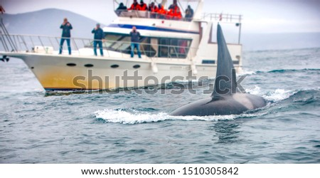 the whale and the boat with tourists