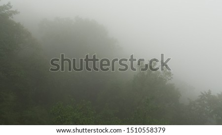foggy forest photos for background