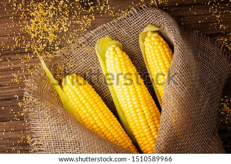 Grains of ripe corn on wooden background.Fresh corn on cobs on rustic wooden background in burlap near the corn grits. closeup #1510589966