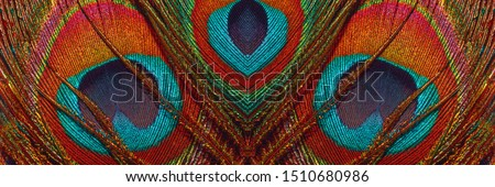 Peacock feathers close up. Peacock tail, banner. Peacock feather pattern, panoramic view. Abstract background with pattern. #1510680986