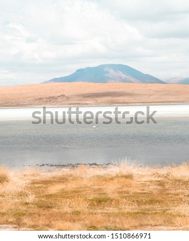 Close up of beautiful pink flamingos walking and feeding in lake. Natural wildlife shot in Uyuni Salt Flats, Bolivia. Animal with water and mountain landscape background. Wild animal in nature.