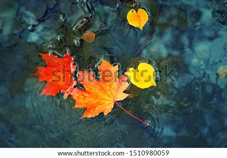 fall season concept. autumn maple leaves in puddle. autumn atmosphere image. maple leaves on water backdrop. copy space #1510980059