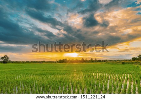 Natural scenic beautiful sunset and rice field agricultural background #1511221124