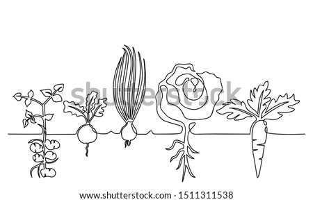 One lines drawing vector ripe vegetables set, black and white sketch of a family of plants growing in the ground, isolated on a white background. Edible harvest one line hand drawn illustration Royalty-Free Stock Photo #1511311538