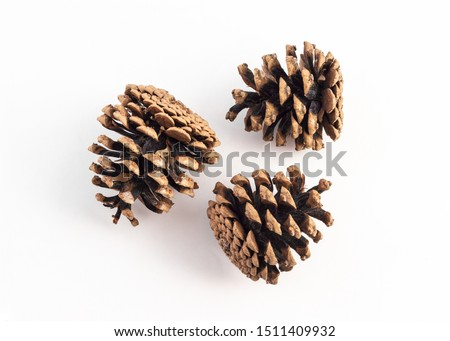 group of pinecone on white background Royalty-Free Stock Photo #1511409932