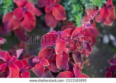 Ornamental plants for city beds #1511505890