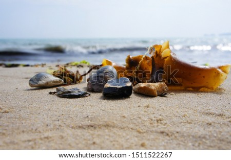 Macro shooting. A sprig of algae and several shells lie on a sea sandy beach in the foreground. The waves, the shore and the lowered red sails of the yacht are in the background bokeh #1511522267