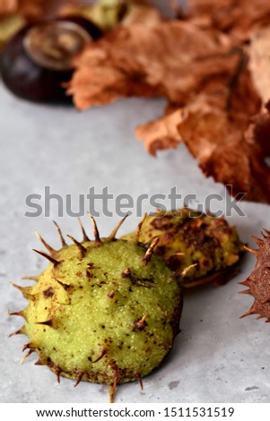 Thorny horse chestnut shell or peel half with spikes on dirty grey surface with dry fallen leaves. Autumn concept. #1511531519