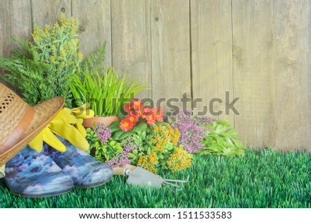 Gardening tools and flowers are on the grass near a wooden unpainted fence. Concept of gardening hobby #1511533583