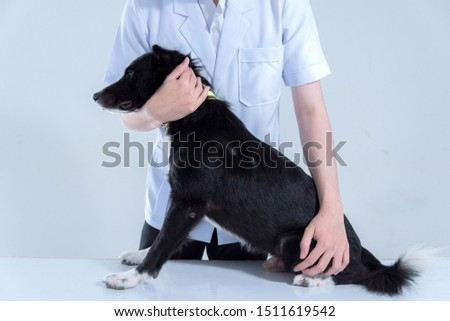 veterinary have control and restraint a dog to immunize for control and prevention of rabies disease ,animal restraint concept Royalty-Free Stock Photo #1511619542