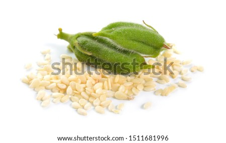 Sesame green pods with seed isolated on white background. #1511681996