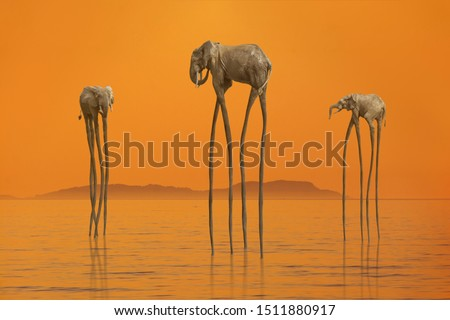 Surreal scene with three African elephants with enormous long legs walking in the calm sea against mysterious island on horizon lit by soft sunset orange light. Nature beauty concept Royalty-Free Stock Photo #1511880917