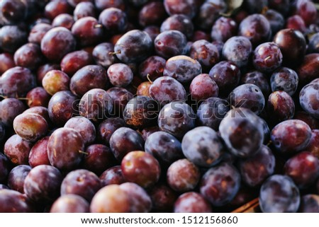 Macro Photo food fruit plums. Texture background of fresh blue plums. Image fruit product blue plums #1512156860
