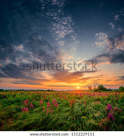 Beautiful sun set landscape with a wild field full of purple flowers and green grass. Sunset cloudy sky above meadow.pe. #1512229151