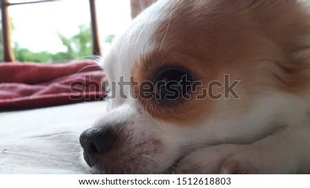 cute animal  cute dog  animals  dog #1512618803