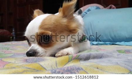 cute animal  cute dog  animals  dog #1512618812