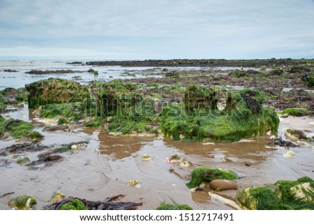 Botany Bay, Isle of Thanet on the southeast cost of England, white cliff near Ramsgate #1512717491