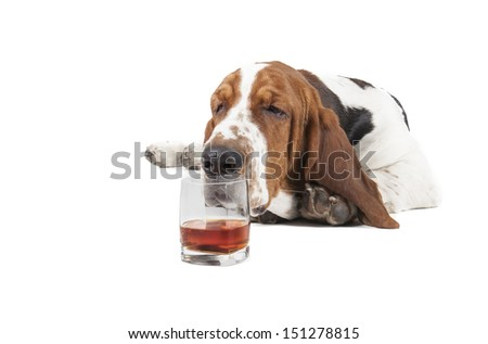 Dog (Basset with a glass of whisky on a white background in the Studio