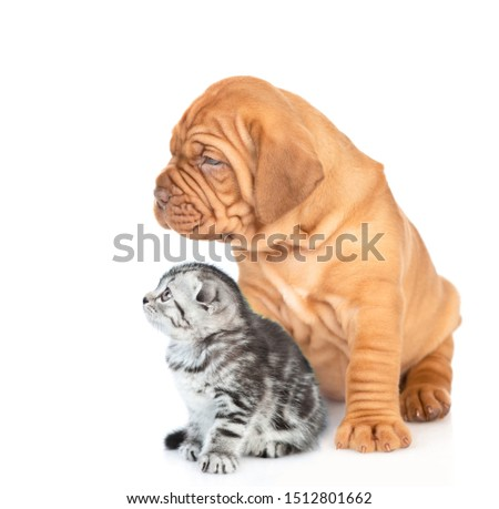 Portrait of a mastiff puppy with gray tabby kitten sitting in profile and looking away. isolated on white background #1512801662