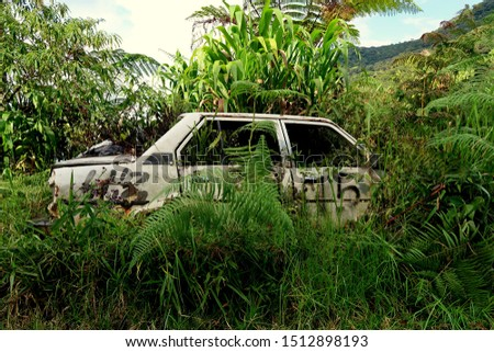 old vintage abandoned white car in the tropical nature jungle (malayia)