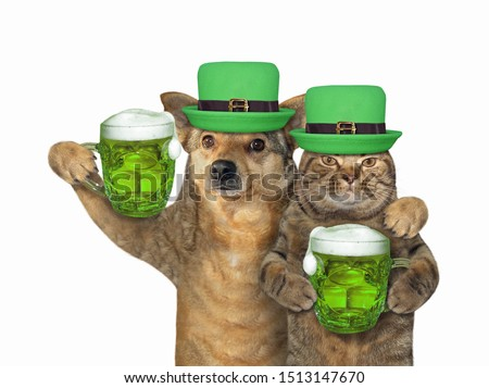 The cat and dog in green hats with beer celebrate St. Patricks Day together. White background. Isolated.