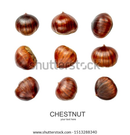 Chestnut Pattern. Creative layout of Chestnuts isolated  on white background. Top view. Flat lay #1513288340