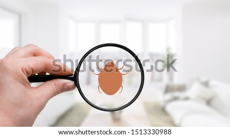 Control pest cimex background bed bedbug bedding