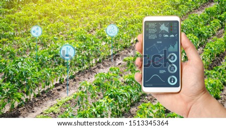 Farmer hold a smartphone on a background of a field with a pepper plantations. Agricultural startup. Automation and crop quality improvement. High technology, innovation. Scientific research. #1513345364