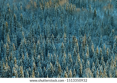 Dark coniferous forests (boreal coniferous forest). Dense marshy forest in Siberia. Siberian taiga in winter. Top view on snow-covered spruce forest, old spruce forest, Siberian spruce (Picea obovata) #1513350932