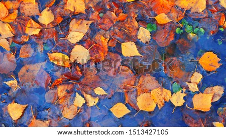 Colourful fall leaves in pond lake water, floating autumn leaf. Fall season leaves in rain puddle. Sunny autumn day foliage. October weather, november nature background. Beautiful reflection in water #1513427105