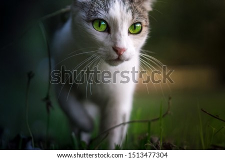 cute cat with cute eyes #1513477304