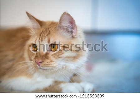 cute cat with cute eyes #1513553309