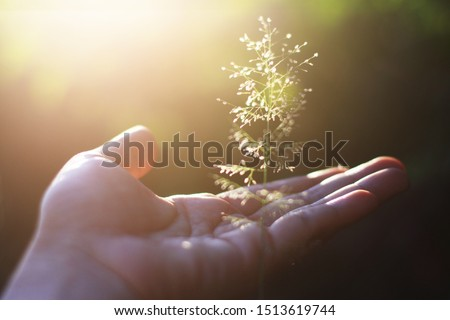Hand holding Beautiful grass flowers with natural sunlight. Peace and Amity of Valentine's day concept. #1513619744